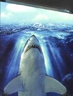 Reliure Requin