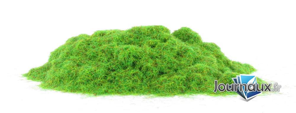 Fibres d'herbes de terrain boisé