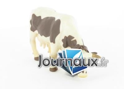 Vache brun et blanc broûtant avec cloche