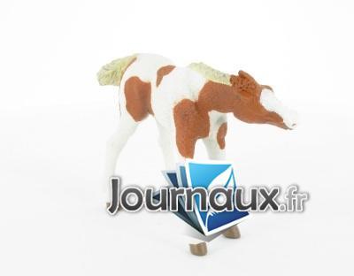 Poulain Pinto s'allaitant