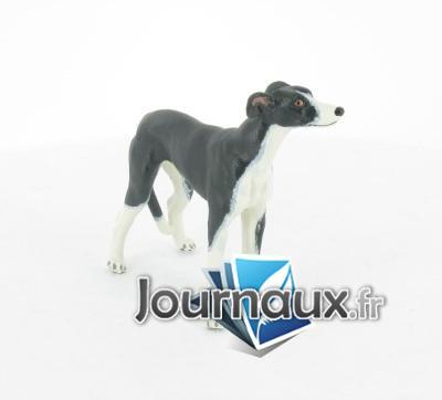 Lévrier Greyhound