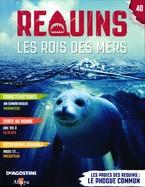 Les Proies Des Requins : Le Phoque Commun